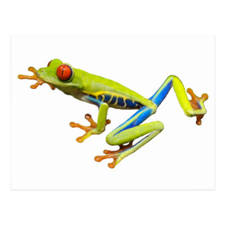 Red Eyed Tree Frog clipart colorful frog #4