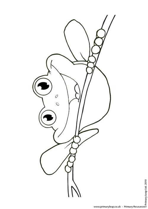 Red Eyed Tree Frog clipart coloring book #8