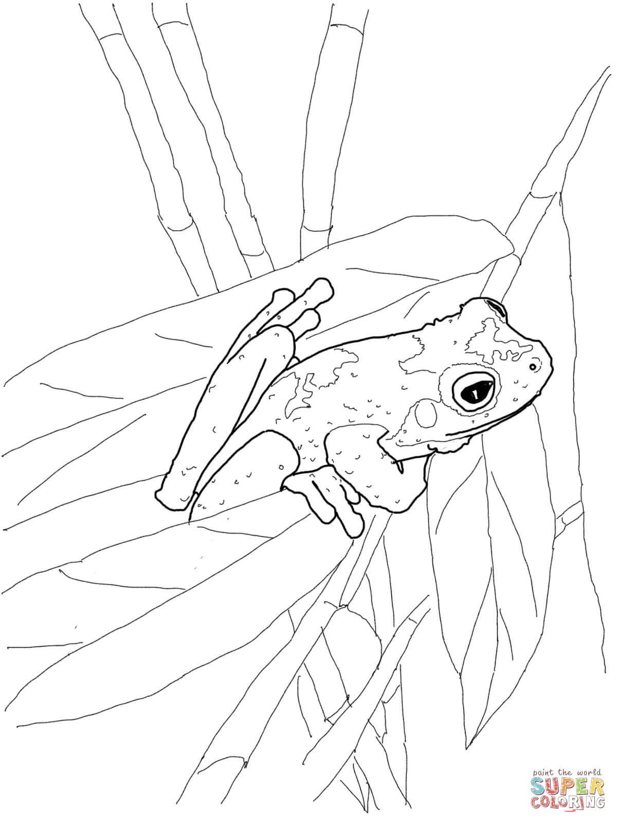 Red Eyed Tree Frog clipart coloring page Coloring page Green Pages Tree