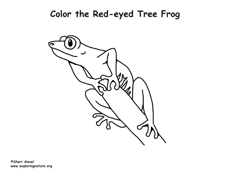 Red Eyed Tree Frog clipart coloring page Page Tree Red photo#10 Red