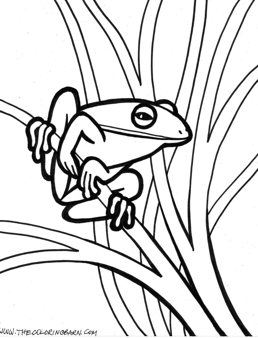 Red Eyed Tree Frog clipart coloring page  Pages Red Pages Coloring