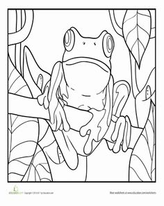 Red Eyed Tree Frog clipart colouring page #3