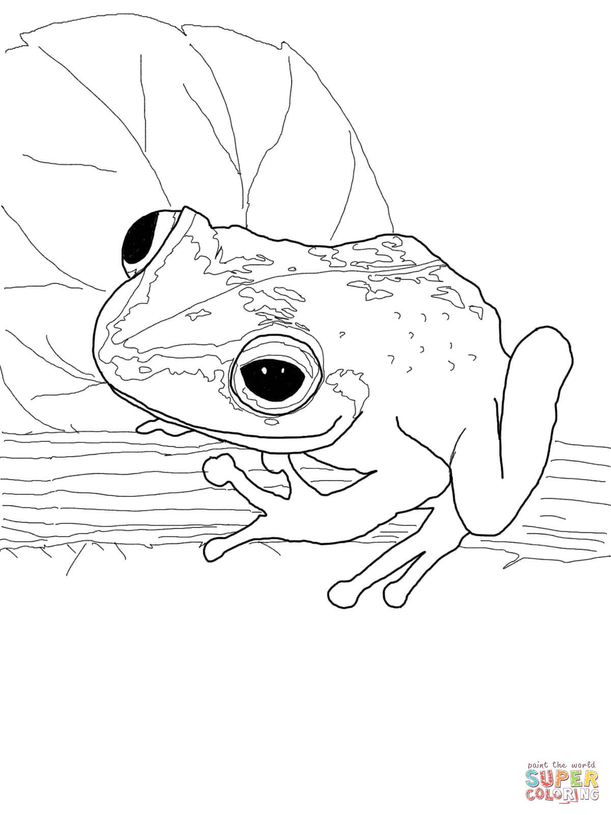 Red Eyed Tree Frog clipart coqui #13