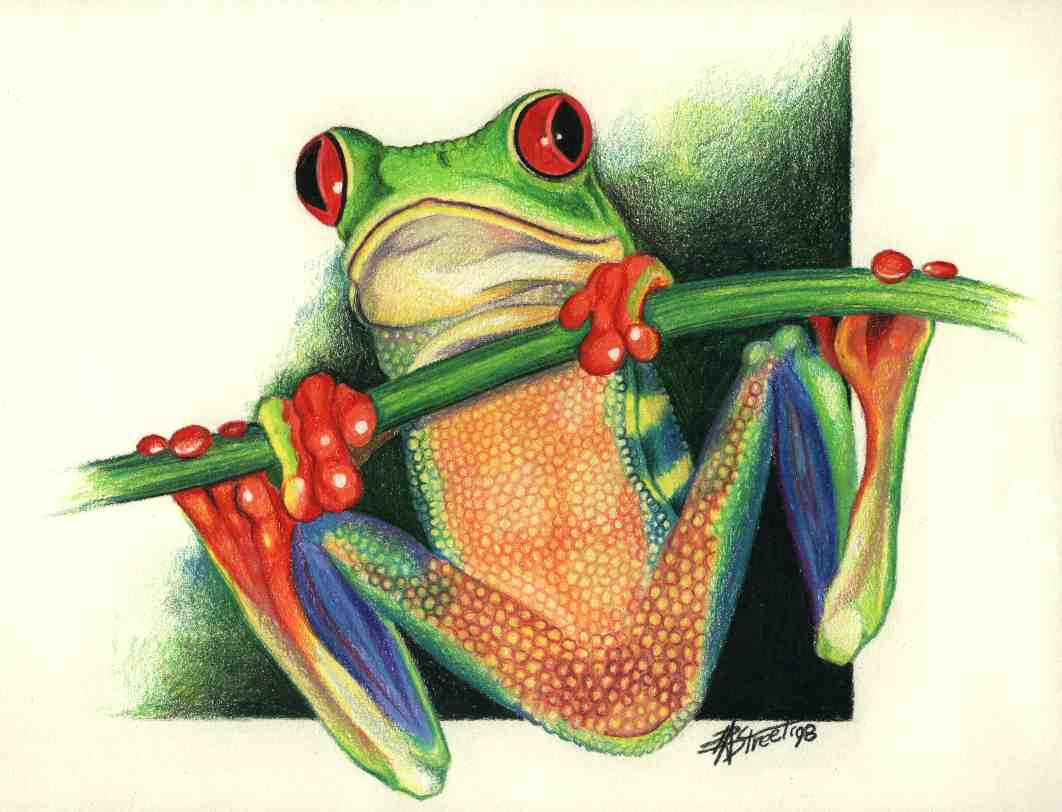 Red Eyed Tree Frog clipart draw a #9
