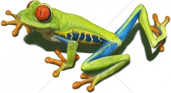 Red Eyed Tree Frog clipart drawn #12