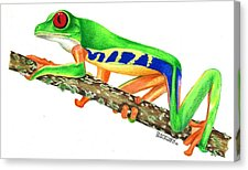 Red Eyed Tree Frog clipart drawn #13
