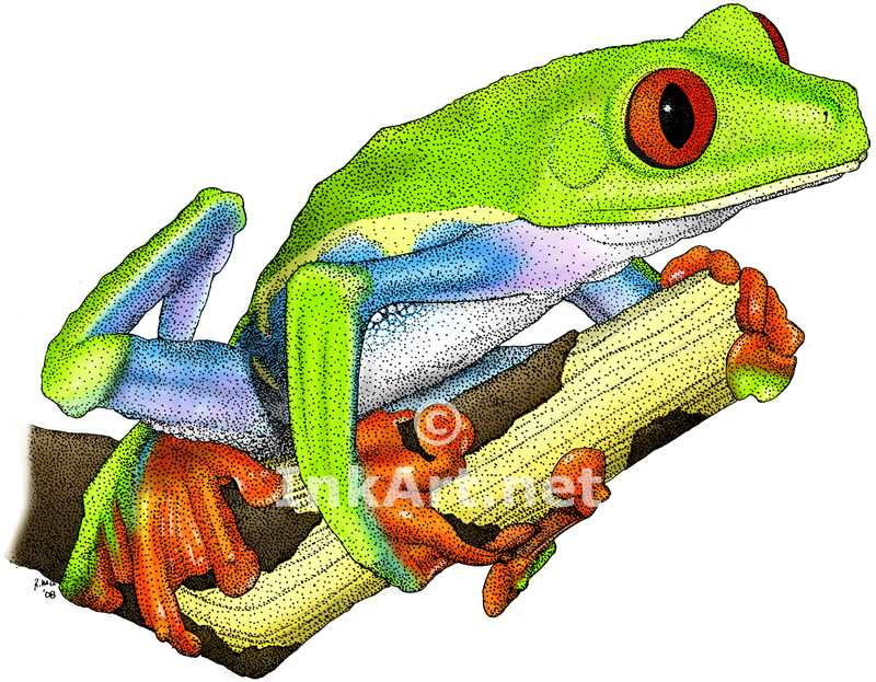 Tree Frog clipart red eyed tree frog #9