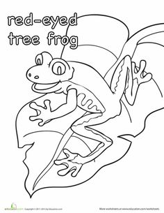 Tree Frog clipart rainforest habitat #15