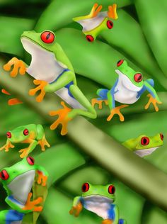 Red Eyed Tree Frog clipart vle #10