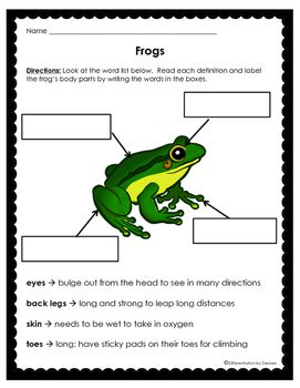 Red Eyed Tree Frog clipart vle #3
