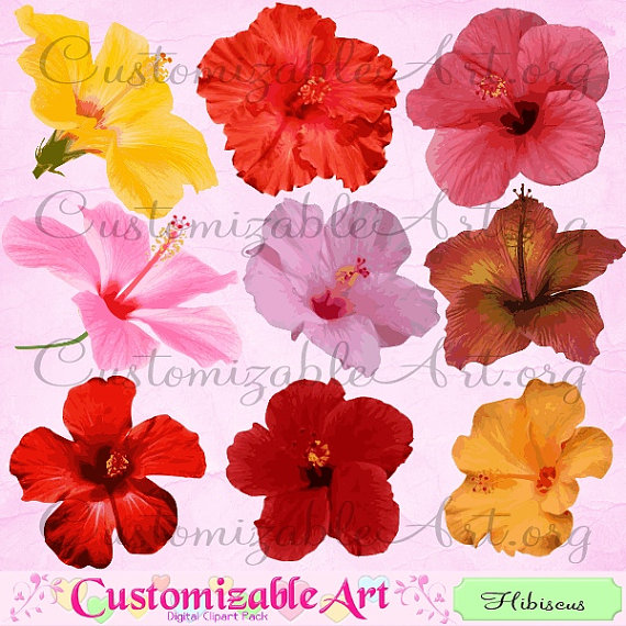 Red Flower clipart orange hibiscus #11