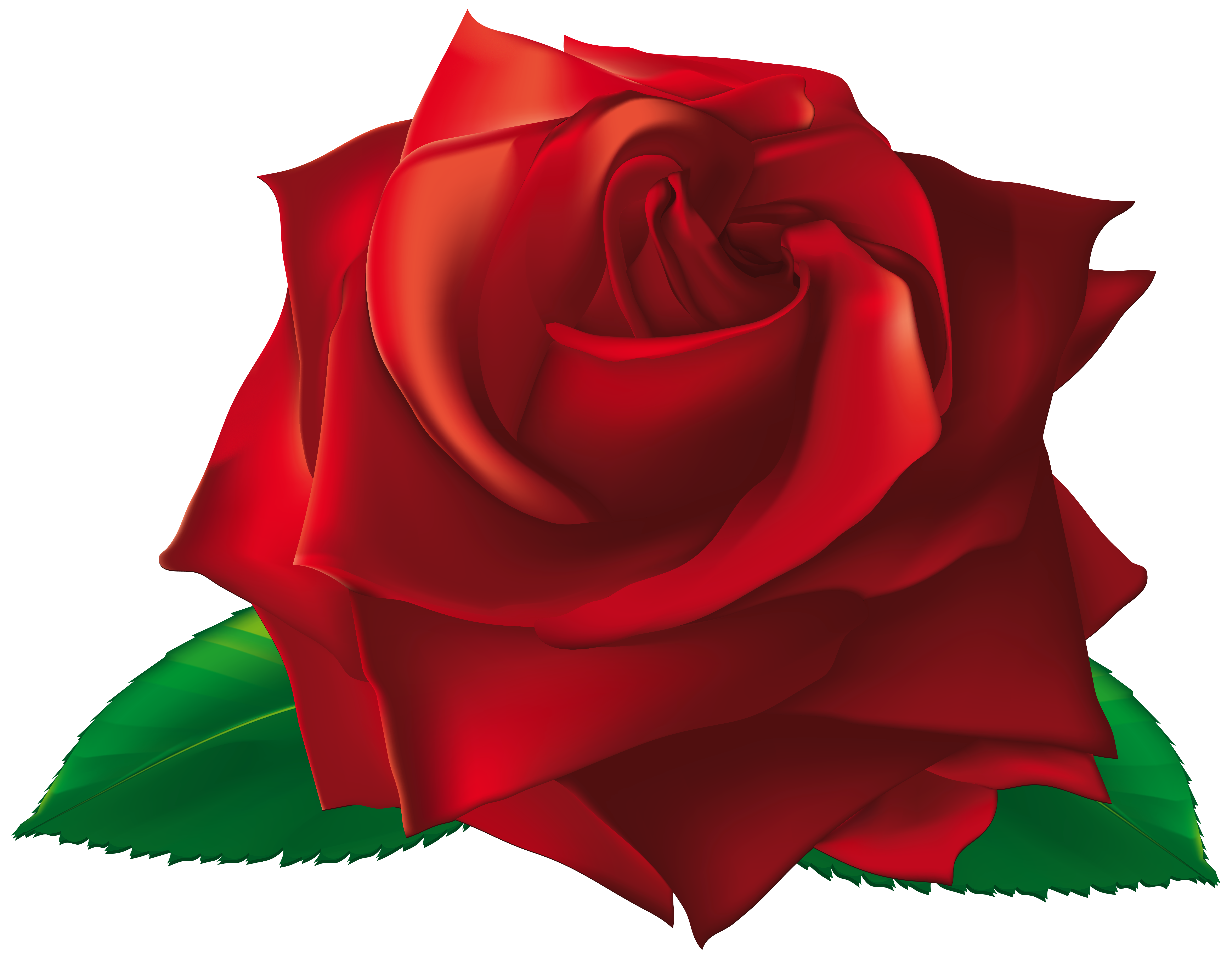 Petal clipart single Rose View  PNG Gallery