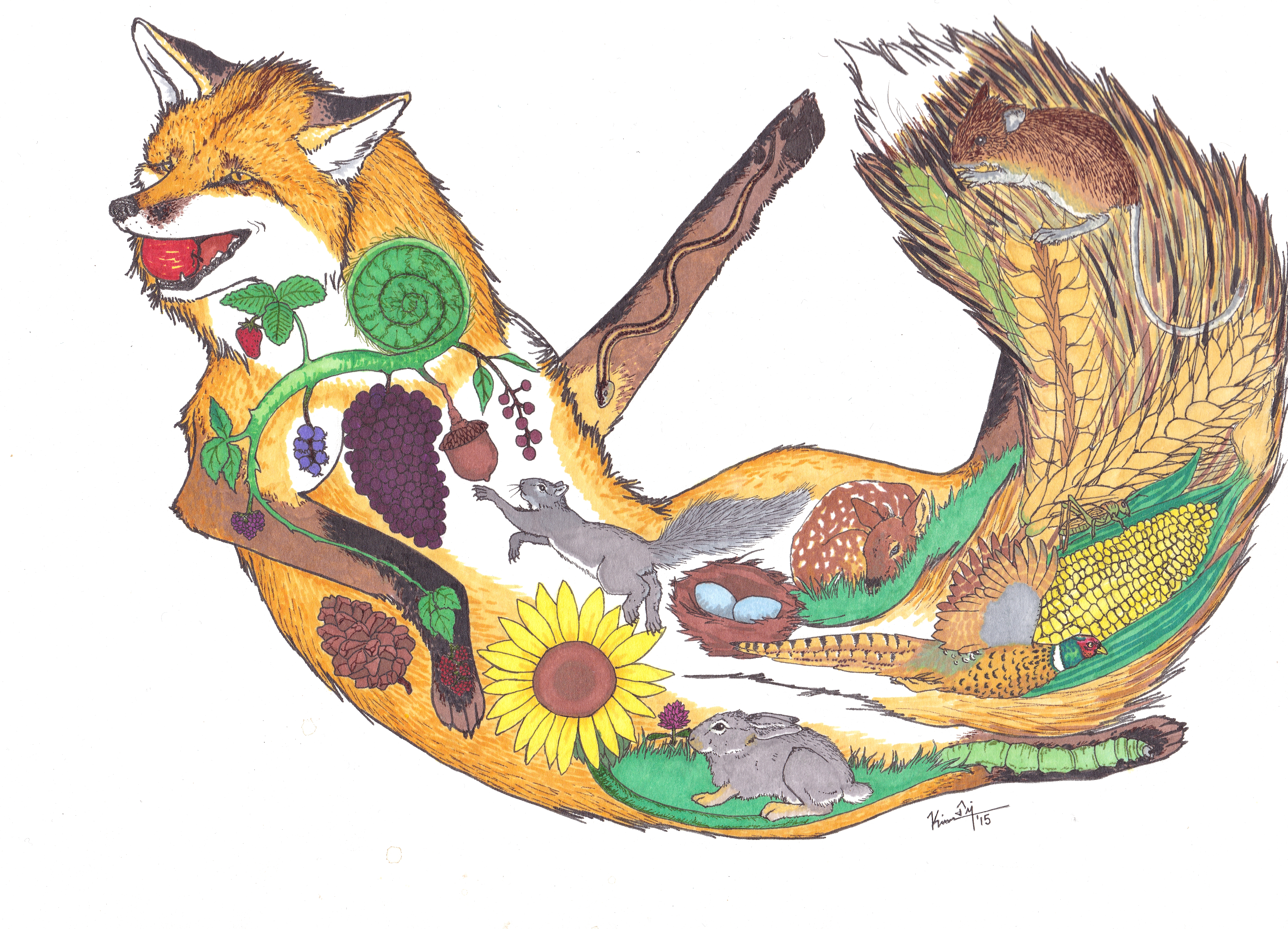 Red Fox clipart grassland animal #15