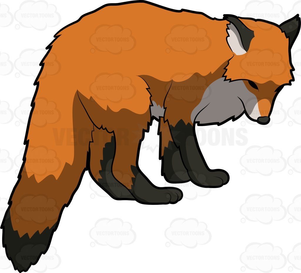 Red Fox clipart omnivore #4