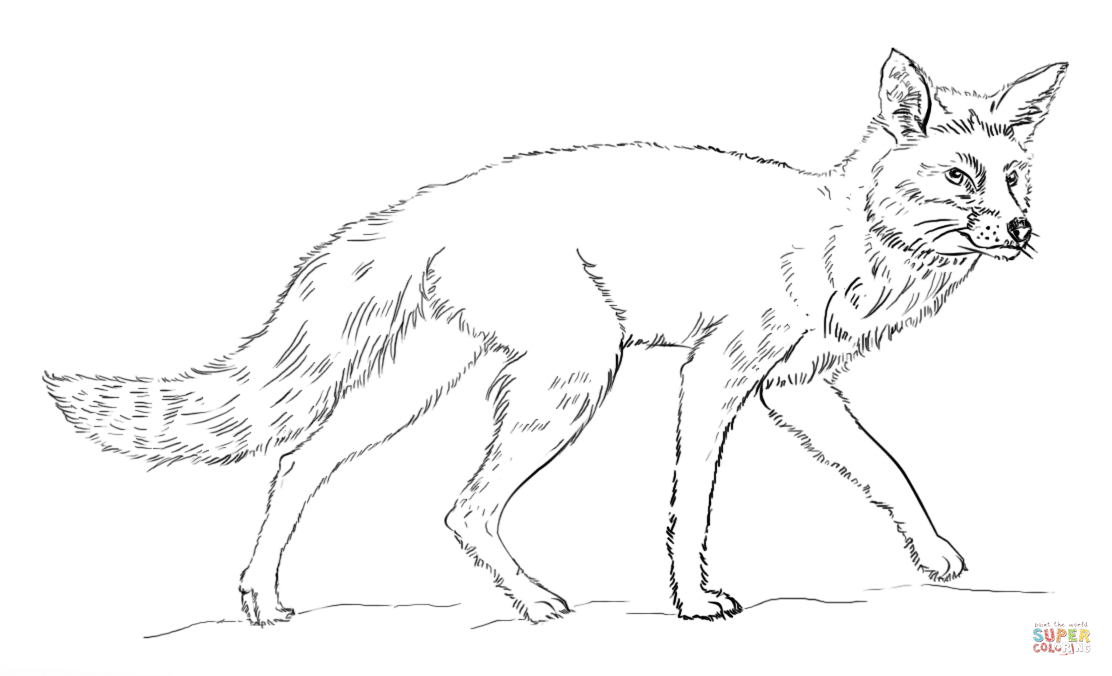 Red Fox clipart white tailed #10