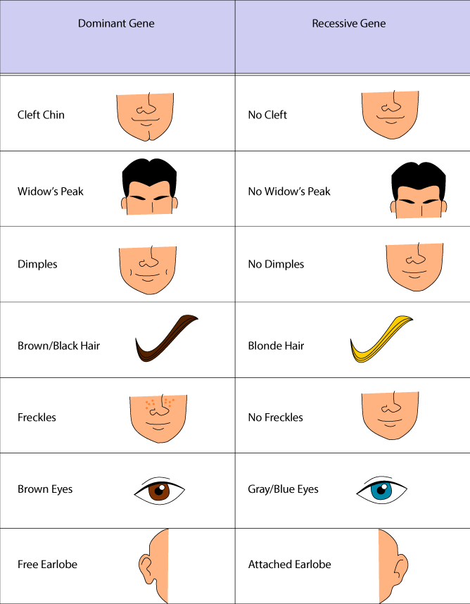 Blue Eyes clipart eye ear  Problem Science Dominant Traits