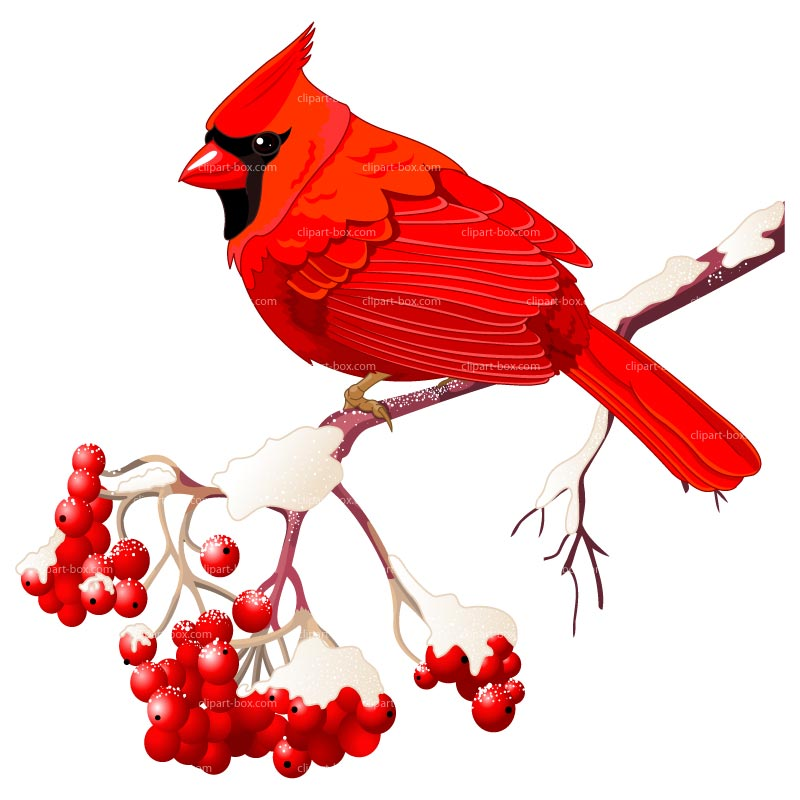 Winter clipart bird Red Red Red clipart drawings