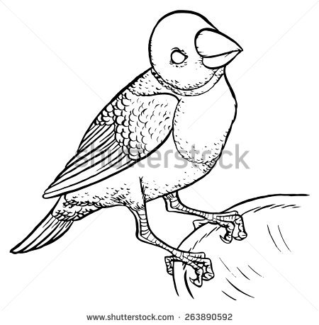 Red Headed Finch clipart black and white #4