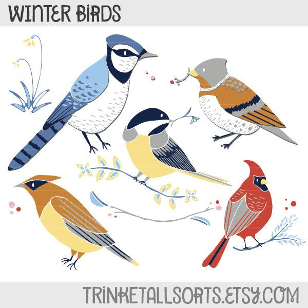 Red Headed Finch clipart etsy Pinterest 25+  on Christmas