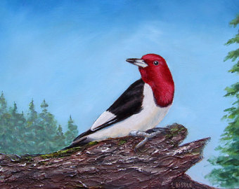 Red Headed Finch clipart etsy Photograph similar Red Woodpecker Black