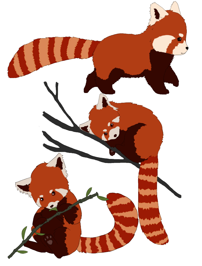 Drawn red panda cartoon Rebel Red doodles clipart panda