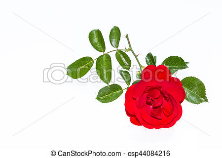 Red Rose clipart bright red #10