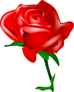 Red Rose clipart bright red #7