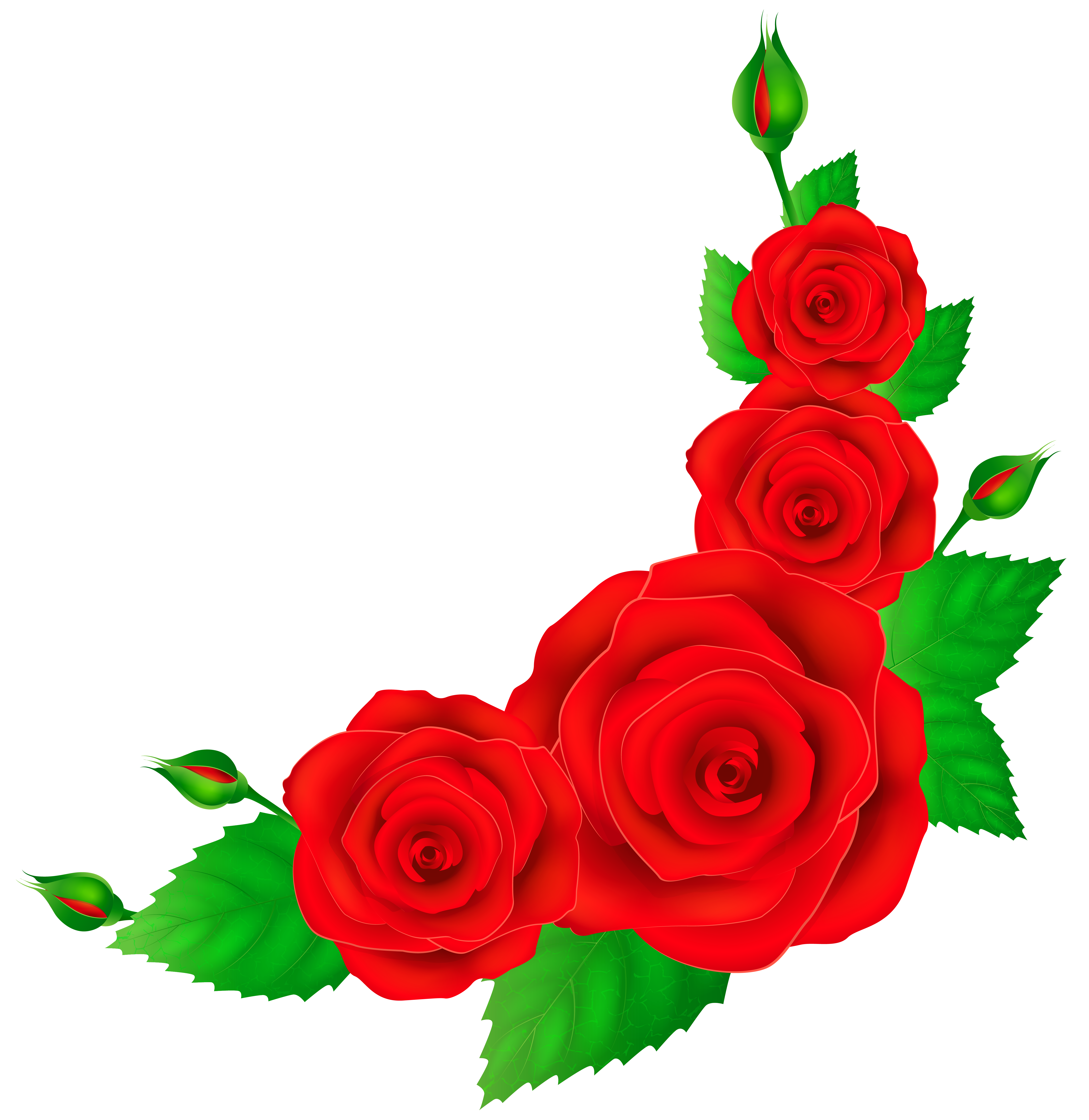 Red Rose clipart decorative #8
