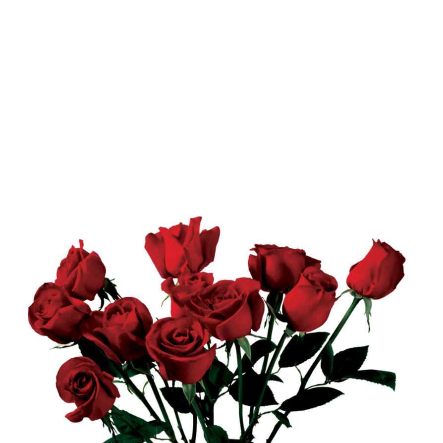 Rose clipart png tumblr #13