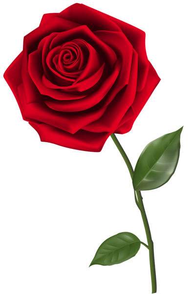Red Rose clipart rosas #11