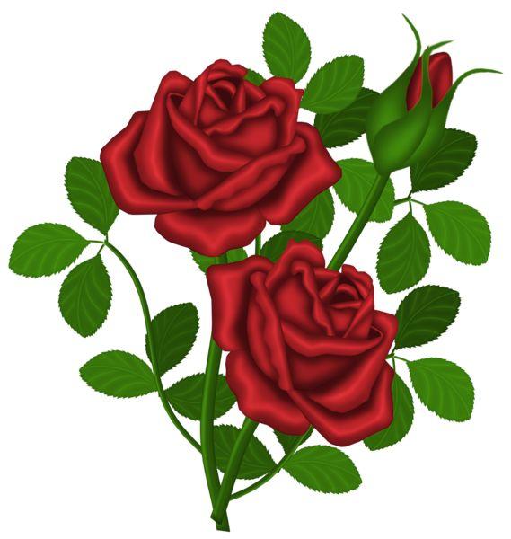 Rose clipart rose plant #3