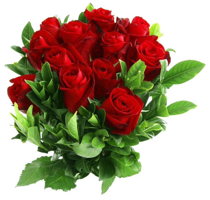 Red Rose clipart rose vine #15