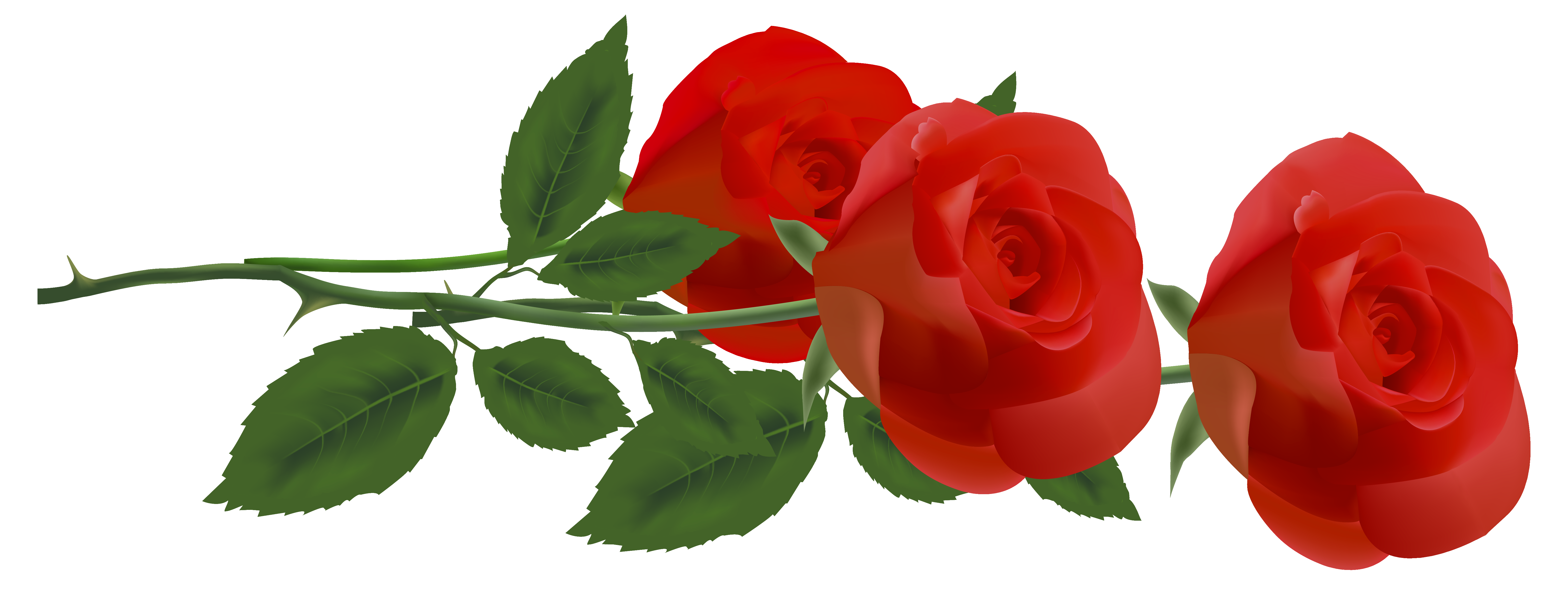 Petal clipart three Size PNG Roses Clipart Picture