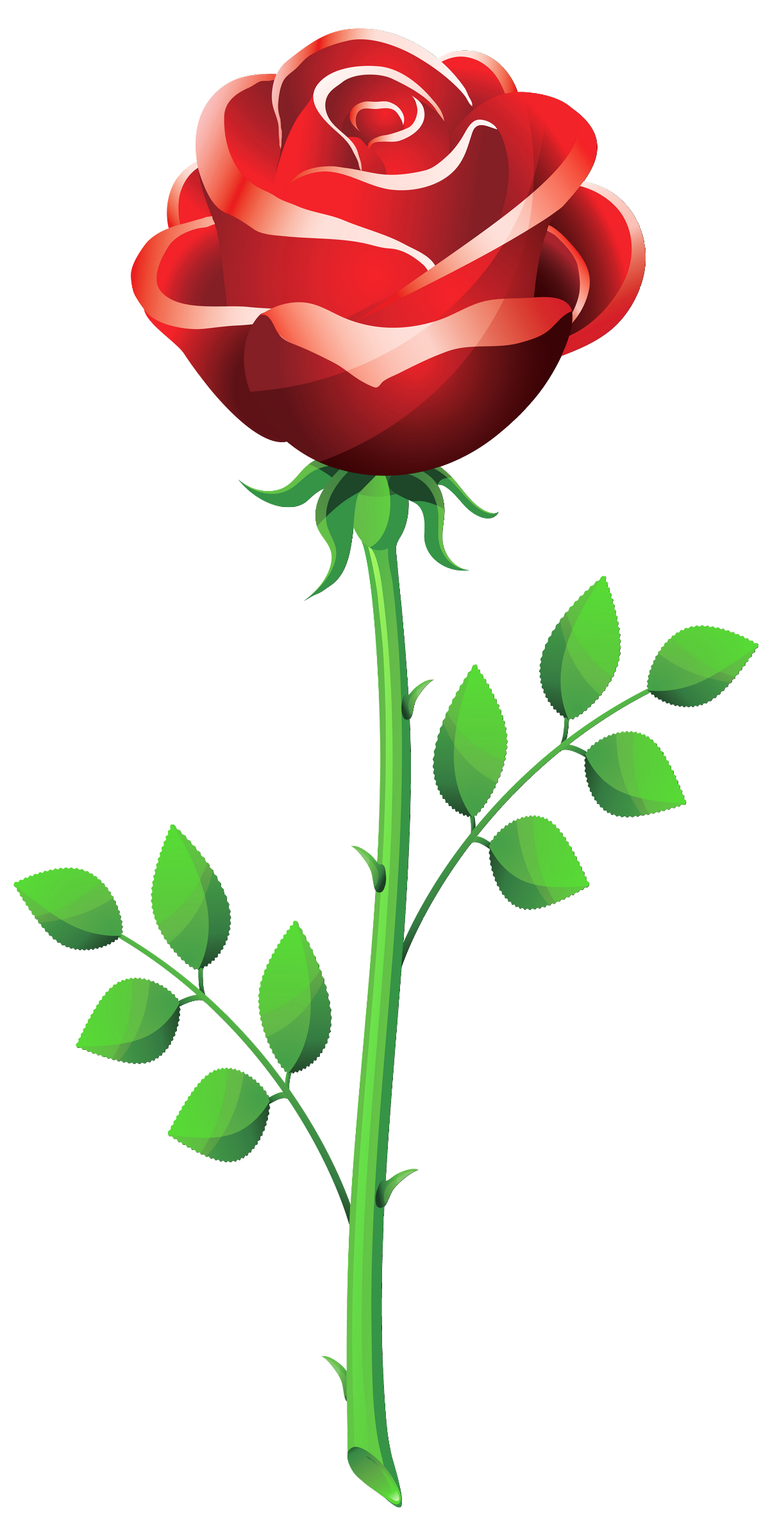 Red Flower clipart valentine rose #11