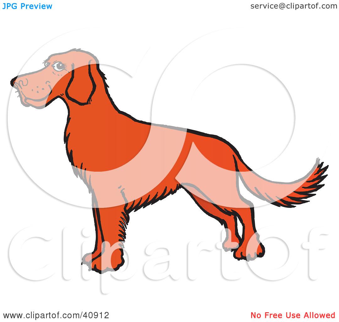 Red Setter clipart cartoon #9