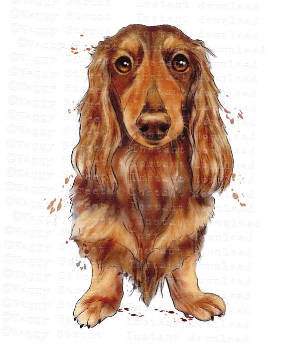 Red Setter clipart haired #5