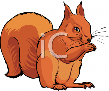 Red Squirrel clipart Squirrel red 1002 #1444_A_Red_Tree_Squirrel_clipart_image 151