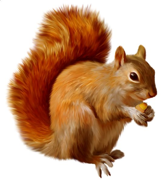 Red Squirrel clipart Clipart Red Clip – Art