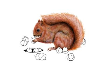 Red Squirrel clipart living thing #3