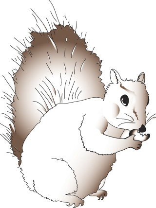 Red Squirrel clipart living thing #13