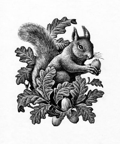 Red Squirrel clipart snow white #12