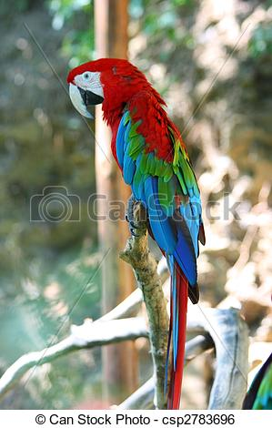 Red-and-green Macaw clipart Red and parrot Photo green