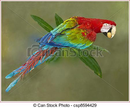 Red-and-green Macaw clipart Green Macaw Download and clipart