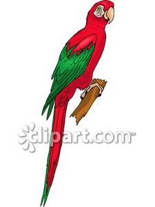 Red-and-green Macaw clipart Red and Clipart A Green