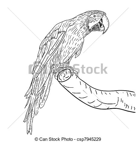 Blue-and-yellow Macaw clipart black and white #14
