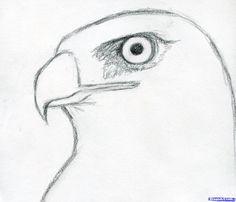 Drawn hawk shaded Exploringnature from org hawk a
