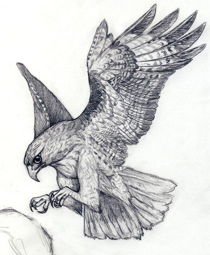 Drawn hawk mean On Tattoo Hawk Hawk Tattoo