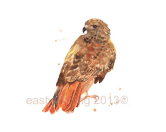 Harris Hawk clipart eagles Of Etsy watercolor Red painting