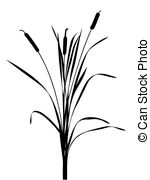 Reed clipart nature cartoon Reed of Vector illustration Reed