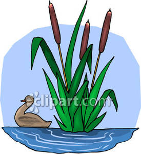 Reed clipart nature cartoon Swimming By Royalty Swimming Royalty